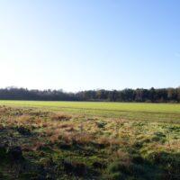 Uitzicht op het open veld en bosrand